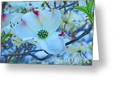 Bloom White Dogwood Greeting Card