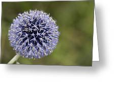 Bloomed Blue Greeting Card