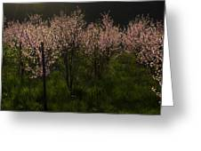 Blooming Almond Trees Greeting Card