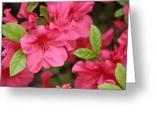 Blooming Azalea Greeting Card