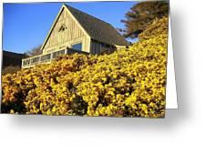 Blooming Bandon Broom Greeting Card