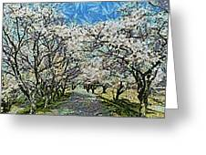 Blooming Cherry Tree Avenue Greeting Card