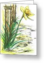 Blooming Daffodil Greeting Card