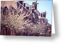 Blooming Decoration Of The Streets. Pink Spring In Amsterdam Greeting Card