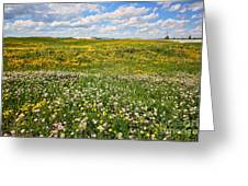 Blooming Fields Greeting Card