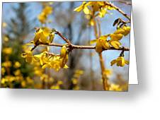 Blooming Forsythia Greeting Card