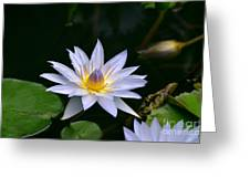 Blooming Lavender Water Lily Greeting Card