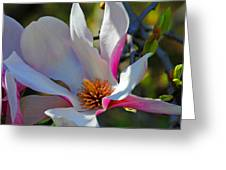Blooming Light Greeting Card
