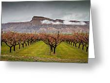 Blooming Orchards 2 Greeting Card