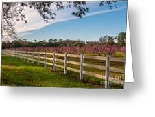 Blooming Peach Tree's At Boone Hall Greeting Card