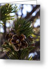 Blooming Pinecone Greeting Card