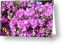 Blooming Pink Azaleas Greeting Card