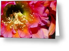 Blooming Pink Explosions  Greeting Card