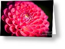 Blooming Red Flower Greeting Card