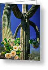 Blooming Saguaro Greeting Card