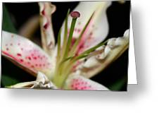 Blooming Stargazer Greeting Card
