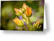 Blooming Succulents I Greeting Card