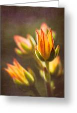 Blooming Succulents V Greeting Card