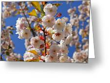 Blooming Trees Greeting Card