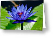 Blooming Water Lily Greeting Card