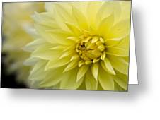 Blooming Yellow Petals Greeting Card