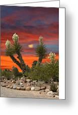 Full Blooming Yucca Greeting Card