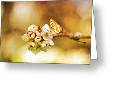Blooms And Butterflies Greeting Card