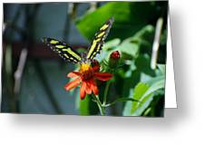 Blooms And Butterfly1 Greeting Card