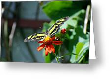 Blooms And Butterfly2 Greeting Card
