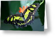 Blooms And Butterfly5c Greeting Card