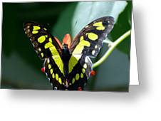 Blooms And Butterfly6c Greeting Card