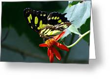 Blooms And Butterfly7c Greeting Card
