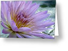 Bloom's Blush Greeting Card