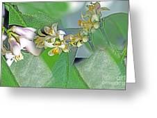 Blooms Of Lemon Tree Greeting Card