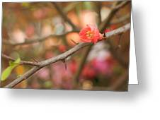 Blossom Amidst The Thorns Greeting Card