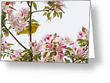 Blossom And Bird Greeting Card