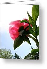 Blossom Bottom Greeting Card