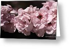 Blossom In Pink Greeting Card