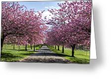 Blossom Lined Walk Greeting Card
