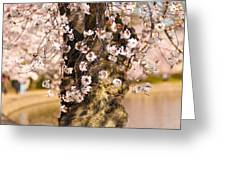 Blossom Ponytails Greeting Card