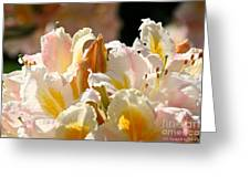 Blossom Top Greeting Card