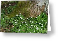 Blossom Windflowers Greeting Card