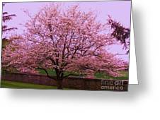 Blossoming Almond Tree  Greeting Card