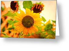 Blossoming Sunflower Beauty Greeting Card