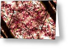 Blossoming Blossoms Greeting Card