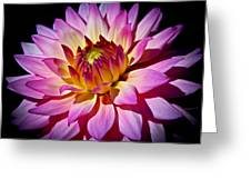 Blossoming Flower Greeting Card