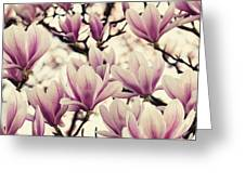 Blossoming Of Magnolia Flowers In Spring Time Greeting Card