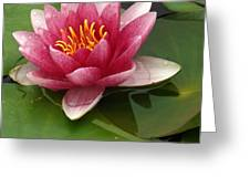 Blossoming Waterlily Greeting Card
