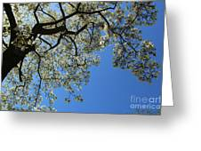 Blossoming White Magnolia Tree Against Blue Sky Greeting Card