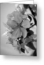 Blossoms 2013 Monochrome Greeting Card